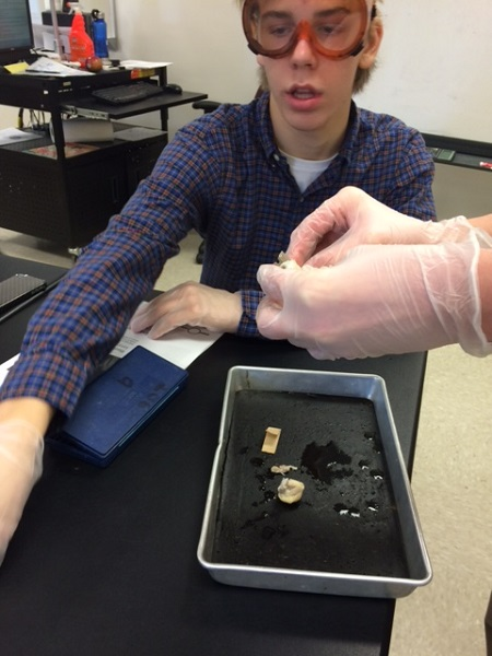 Riley Hough (16') preforms a proper dissection in an Anatomy class. Students learned that a sheep's eye closely resembles a human's eye.