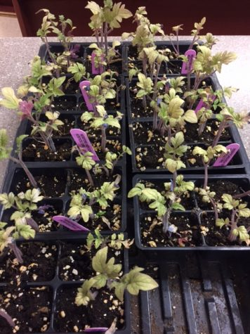 Seedlings are planted and sold by the Ag. Dept. All profits went to the program.