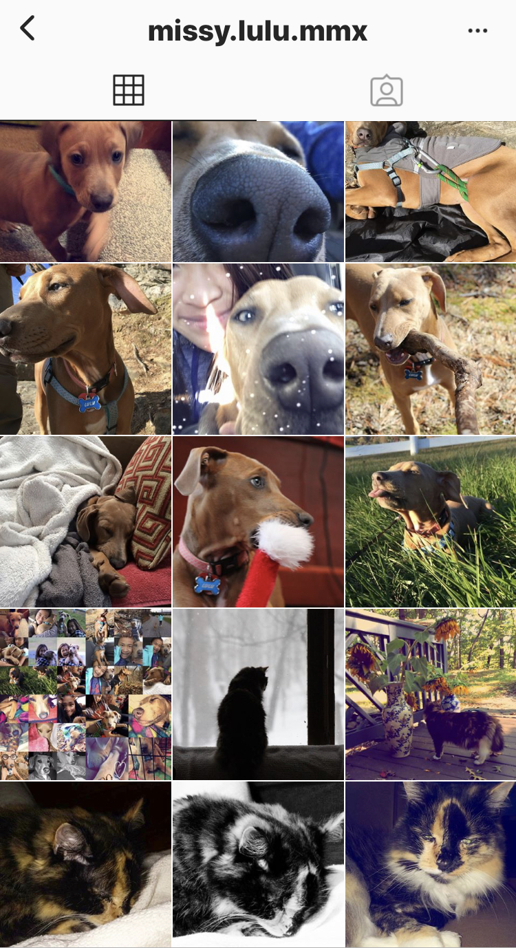 Borton owns an account for her dog Lulu.  She started this account in 2015 to post cute pictures of her dog.